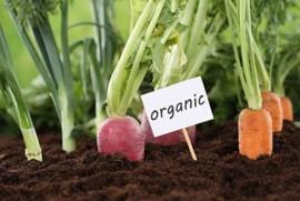 Vì sao rau trồng theo mô hình hữu cơ lại có giá rất đắt so với rau trồng thông thường